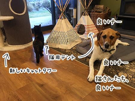 04062018_dog3.jpg