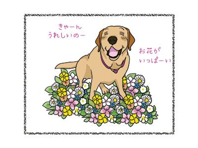 08052018_dog2.jpg