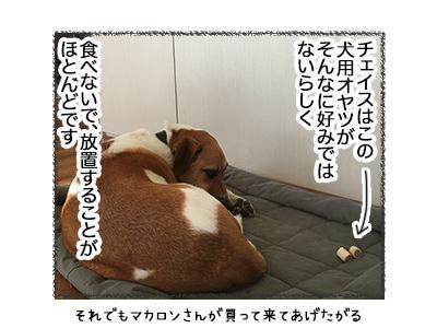 10052018_dog1.jpg