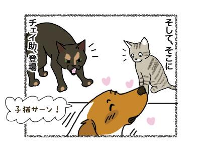 11042018_dog2.jpg