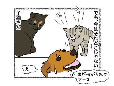 11042018_dog3.jpg