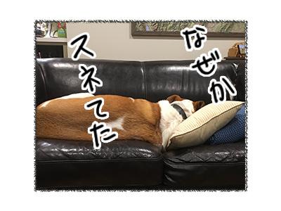 11052018_dog4.jpg