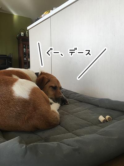 12042018_dogpic2.jpg