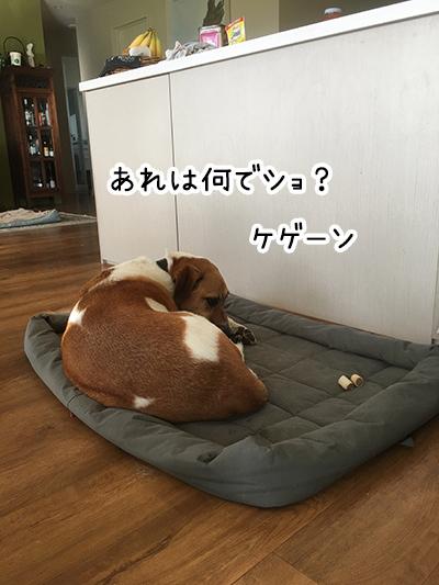 12042018_dogpic3.jpg