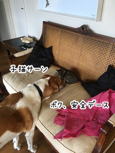 12042018_dogpic4.jpg