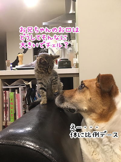 16042018_dog4.jpg