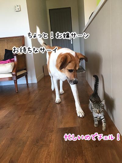16042018_dogd1.jpg