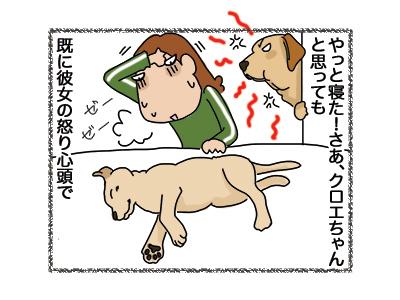 17042018_dog3.jpg