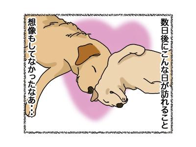 17042018_dog4.jpg
