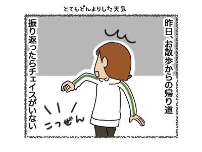 17052018_dog1.jpg