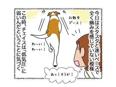 17052018_dog3.jpg