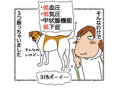17052018_dog4.jpg