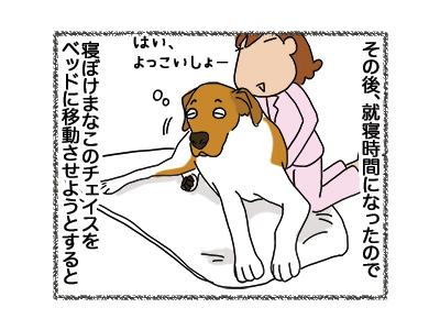 18052018_dog4.jpg