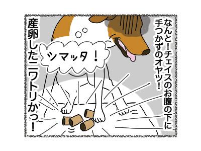 18052018_dog5.jpg