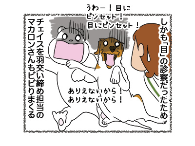 27042018_dog2.jpg