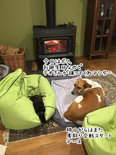 28052018_dog2.jpg