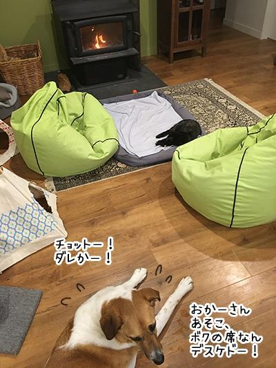 28052018_dog3.jpg