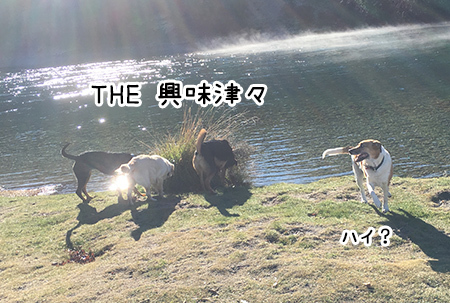 29052018_dog6.jpg