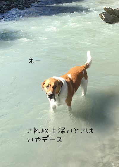 31032018_dog2.jpg
