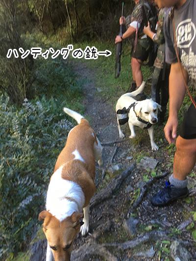 31032018_dog4.jpg