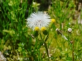地味めの花