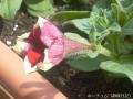 どんどん花を撮る1