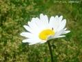 どんどん花を撮る3