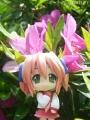 どんどん花を撮る6