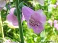 角度を変えて花を撮る1