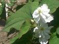どんどん花を撮る7