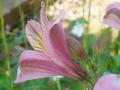 どんどん花を撮る8