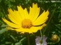 どんどん花を撮る9