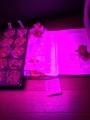 led lettuce and basil