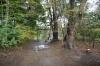 三角池小鳥居