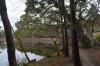 三角池巨樹