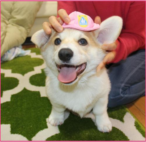 一年生の帽子
