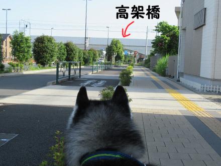 朝から電車観察