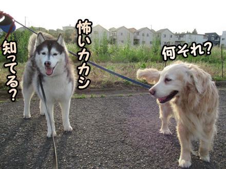 リンちゃん&スフレ