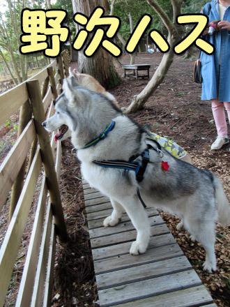 元箱根ルチア