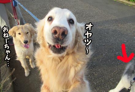 リンちゃん&ルーシーちゃん