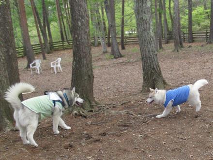 清里丘の公園でラン遊び