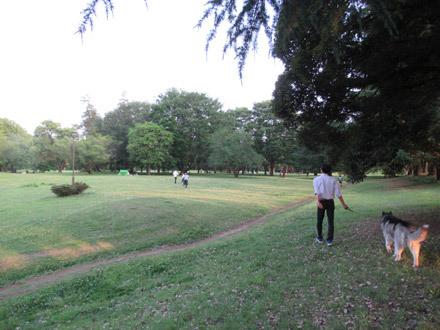 野川公園散歩