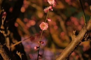 180309kitano(30).jpg