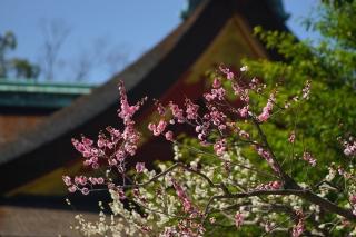180317kitano(1).jpg