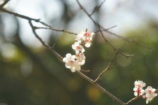 180317kitano(18).jpg