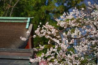 180317kitano(3).jpg