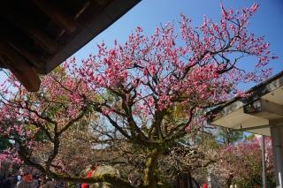 180317kitano(35).jpg