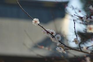 180317kitano(36).jpg