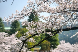 180331okazaki(11).jpg