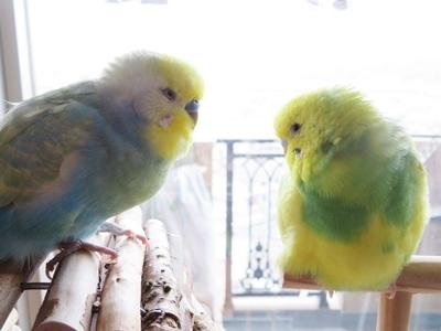 最後は2羽さんで